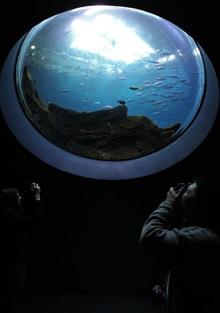Brown_aquarium
