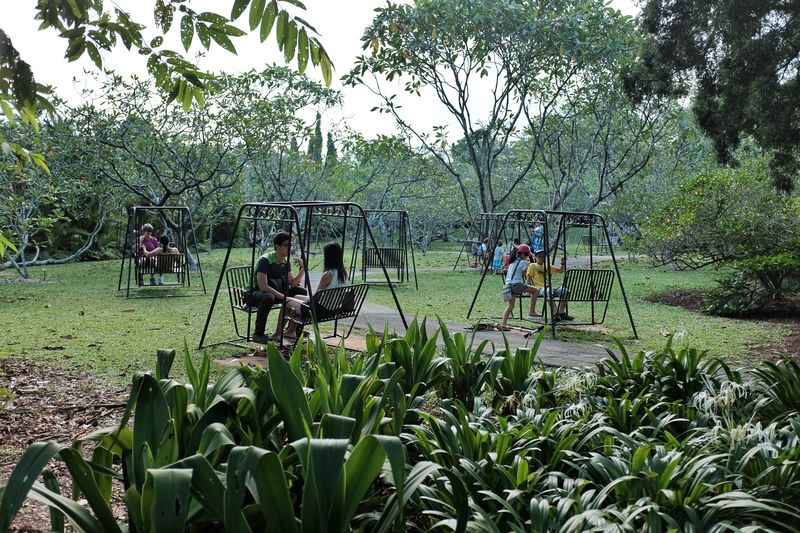 Botanic_swings_05
